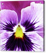 Pansy 07 - Thoughts Of You Acrylic Print