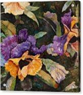 Pansy Tangle Acrylic Print
