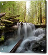 Panther Creek In Gifford Pinchot National Forest Acrylic Print