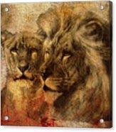 Panthera Leo 2016 Acrylic Print