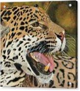 Panthera Acrylic Print