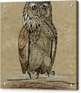 Paper Bag Owl Acrylic Print