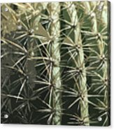 Paper Cactus Acrylic Print