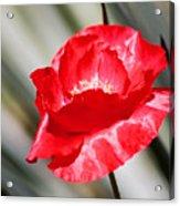 Paper Flower II Acrylic Print