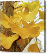 Paper Leaves Acrylic Print