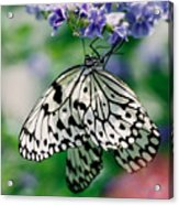Paper Rice Butterfly Acrylic Print