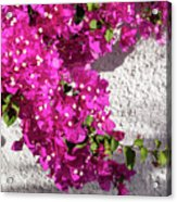 Papery Pink Riot Acrylic Print
