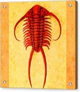 Paraceraurus Fossil Trilobite Acrylic Print