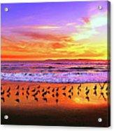 Paradise Found, Huntington Beach, California, Catalina Island Acrylic Print