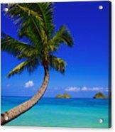 Paradise Palm Over Lanikai Acrylic Print