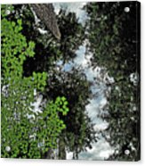 Paradise To Lovers Of Big Trees - Olympic National Park Wa Acrylic Print by Christine Till