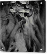 Parallel Botany #5175 Acrylic Print