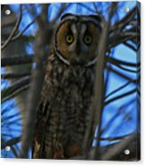 Parallel Leanings - A Hooter Study Acrylic Print