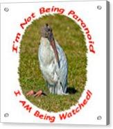 Paranoid Woodstork Acrylic Print