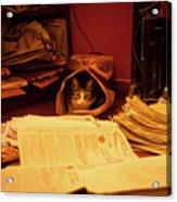 Parcel Cat Acrylic Print
