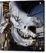 Paris Gallery Of Paleontology 3 Acrylic Print