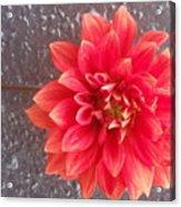 Parisian Flower Acrylic Print