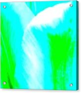 Park Avenue Tulip Acrylic Print