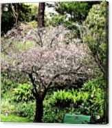 Park Bench At The Old Cherry Blossom Tree . 7d5804 Acrylic Print by Wingsdomain Art and Photography