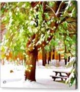 Park In Winter Acrylic Print