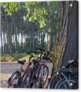 Parked Mountain Bikes Leaning Against A Tree Trunk Acrylic Print