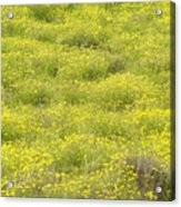 Parker Ranch Field Of Yellow Acrylic Print