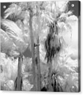 Parking Lot Palms 1 1 Acrylic Print