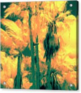 Parking Lot Palms 1 3 Acrylic Print