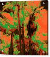 Parking Lot Palms 1 6 Acrylic Print