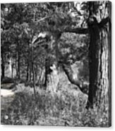 Parkland Trail Acrylic Print