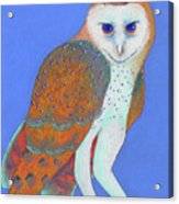 Parliament Of Owls Detail 1 Acrylic Print
