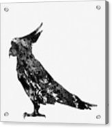 Parrot-black Acrylic Print