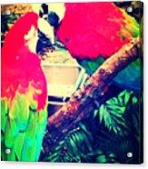 Parrot Couple Acrylic Print