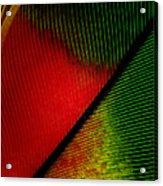 Parrot Feather Macro Acrylic Print