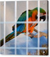 Parrot In A Cage Acrylic Print