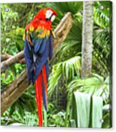 Parrot In Tropical Setting Acrylic Print