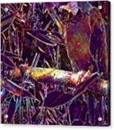 Parrot Macaw Bird Tropical  Acrylic Print