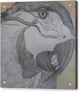 Parrot Acrylic Print