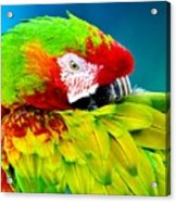 Parrot Time 1 Acrylic Print