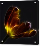 Parrot Tulip Abstract Acrylic Print