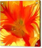 Parrot Tulips Acrylic Print