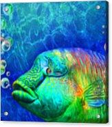 Parrotfish - Rainbow Spirit Acrylic Print