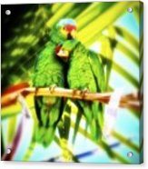 Parrotheads 2016 Redux For Shirts Acrylic Print
