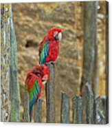 Parrots, Doue-la-fontaine Zoo, Loire, France Acrylic Print