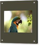 Parrot's Eye Acrylic Print