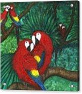 Parrots Preening Acrylic Print