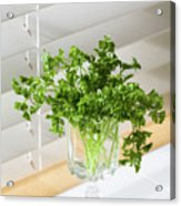 Parsley Bouquet Acrylic Print