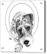 Parson Russell Terrier @elmo.parson Acrylic Print