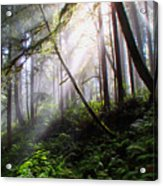 Parting Of The Mist Acrylic Print