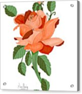 Party Colored Rose Acrylic Print